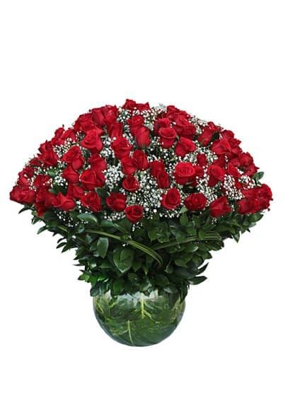 200 Optimum Red Rose