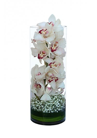 Long White Cymbidium