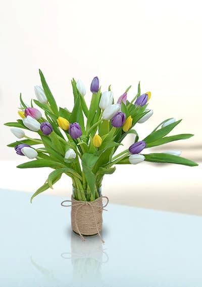 Beauty of Tulips