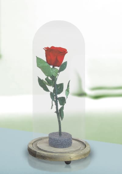 Preserved Rose - RED
