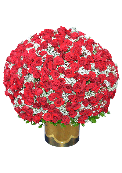 500 Red Roses