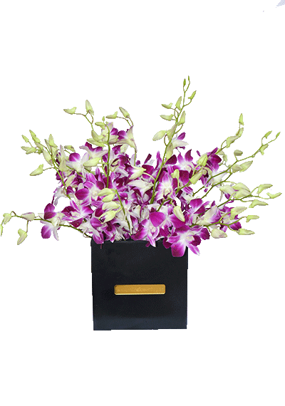Purple Orchids In Box